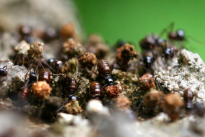 An Ant Colony has Memories That Its Individual Members Don't Have