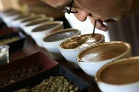 Explaining the Biology of Coffee