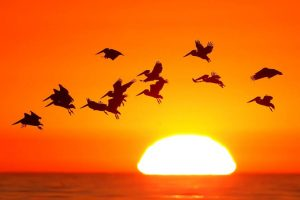 Birds Species Extinction Rates Accelerate Hundred Times Faster than Before