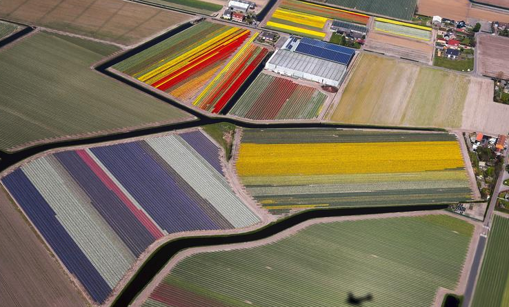 Explained: Why the Netherlands Is Sinking