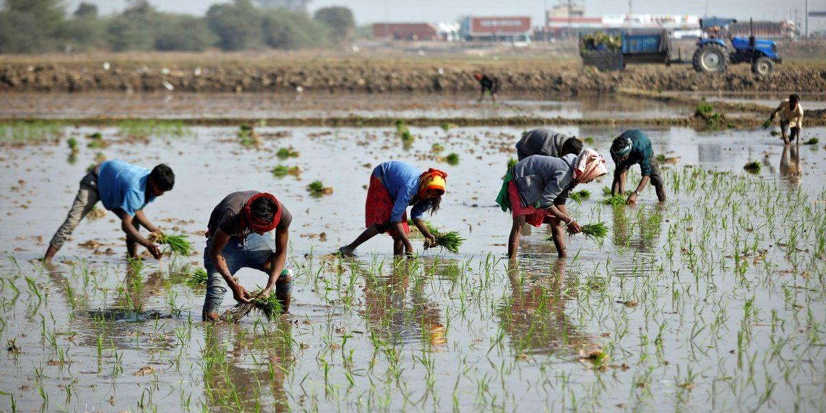 Govt Revamps PMFBY Crop Insurance Scheme, Makes Farmer Registration Voluntary