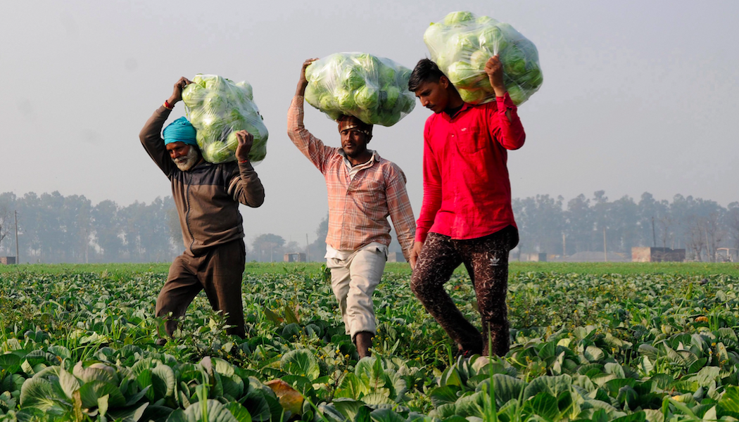 What Can the Centre Learn From How States Are Managing Their Own Crop Insurance Schemes?
