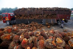 After India's Import Curbs, Coronavirus Adds to Malaysian Palm Oil's Export Woes