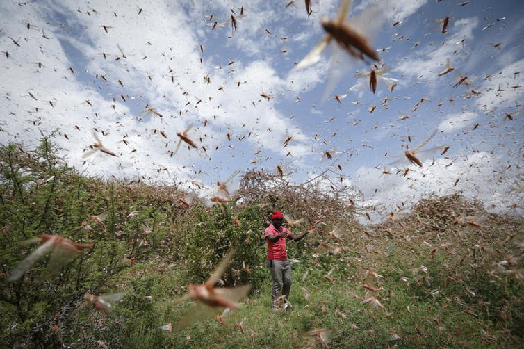 How Should a Country Prepare for a Locust Swarm?