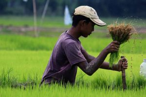Paddy Procurement Woes Abound as Chhattisgarh Govt Scrambles to Deliver on Promises