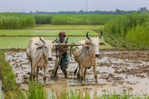 Exclusive: Farmers Owed Rs 3,000 Crore in Crop Insurance Claims 7 Months After Deadline