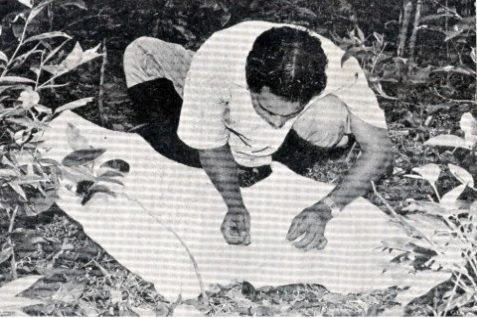 Ticks being picked off (the person in this image is not P.K. Rajagopalan). Credit: P.K. Rajagopalan