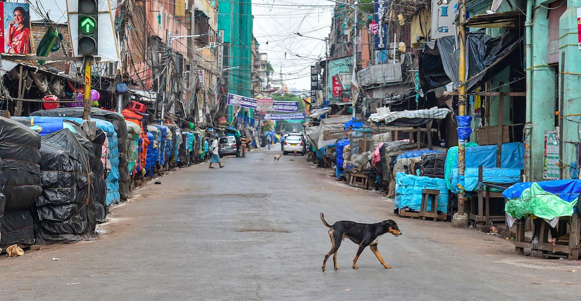 Nagaland Bans Sale, Consumption of Dog Meat