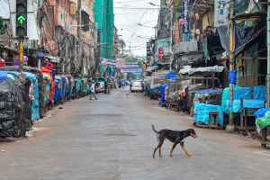 Nagaland Bans Sale, Consumption of Dog Meat