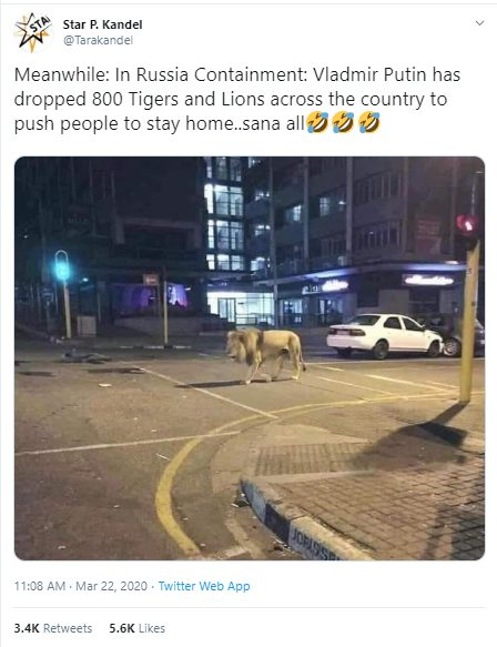 How Fake News On Putin Leaving 800 Lions In Russia S Streets Spread