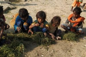 DM, Public Provide Food After Hungry Kids Seen Eating 'Grass' in Modi's Constituency