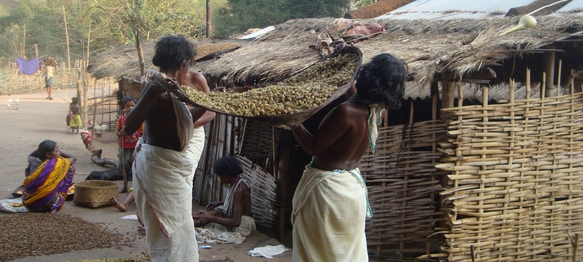 Lockdown Has Pushed Tribes in Odisha's Niyamgiri Hills to the Brink of Starvation