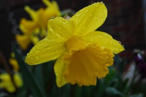 'Solitude Is Bliss': Revisiting Wordsworth's 'The Daffodils'