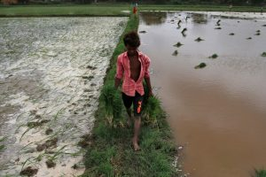 Centre Opts for Long-Term Agricultural Reforms, Leaving Farmers 'Atmanirbhar' in Crisis