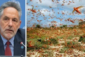 Listen | The Worst of the Locust Invasion is Yet to Come, Says FAO Forecasting Officer