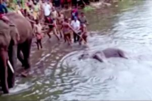 Viral Fake News: 'Amzath Ali and Thamim Shaikh' Not Arrested in Kerala Elephant Death Case