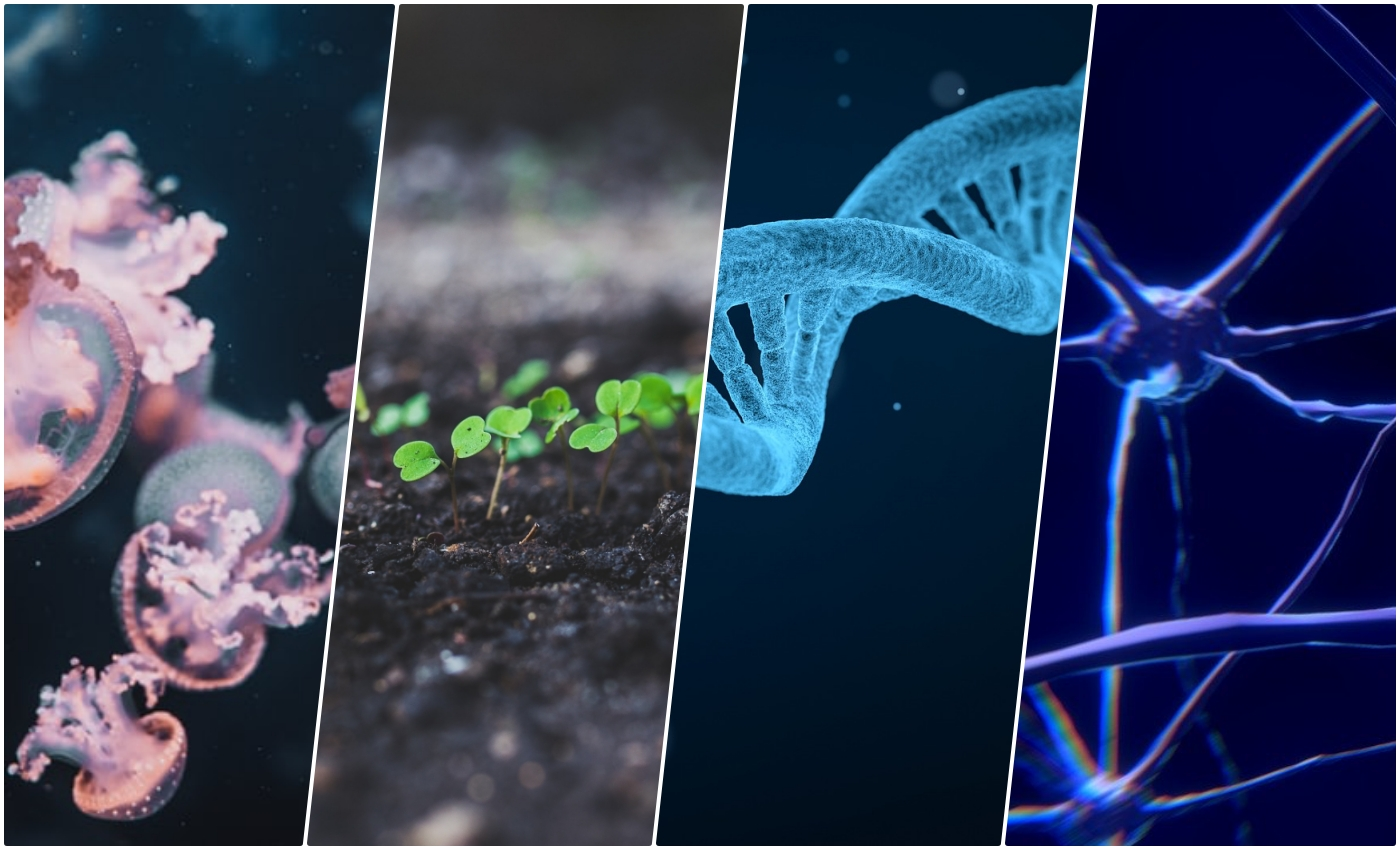 The Bioengineering Technologies to Look Out for in the Next Decade