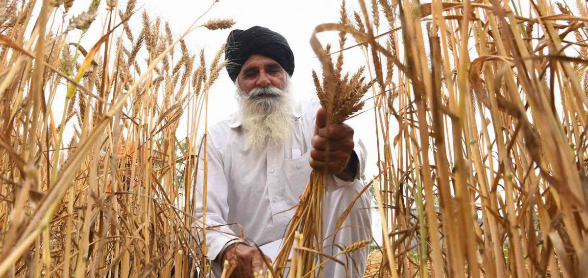 Punjab's Shrinking Agricultural Output Is an Opportunity for the State to Branch Out