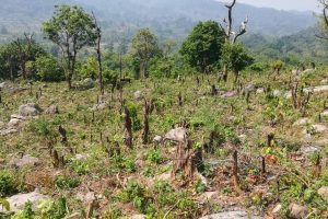 Odisha's Tribal Communities Are Reeling Under a Land Grab ProjectMasquerading as 'Afforestation'
