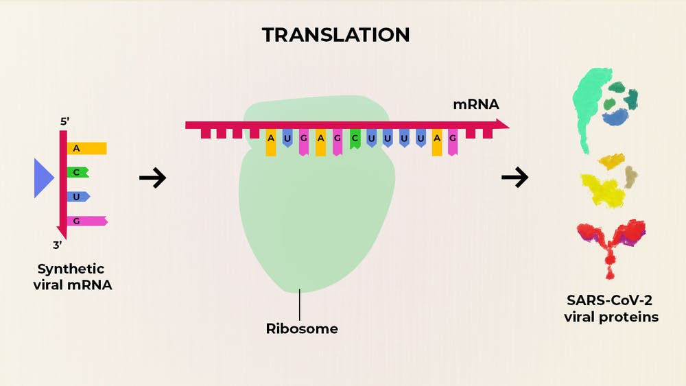 What Are the Advantages of an mRNA Vaccine for COVID-19 ...