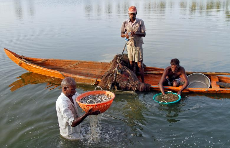 Is the Lower Fish Catch Along India's West Coast the Work of Climate Change? – The Wire Science