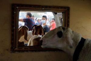 Debate: Why Animal Sacrifice on Eid-ul-Zuha is an Indispensable Part of Islam
