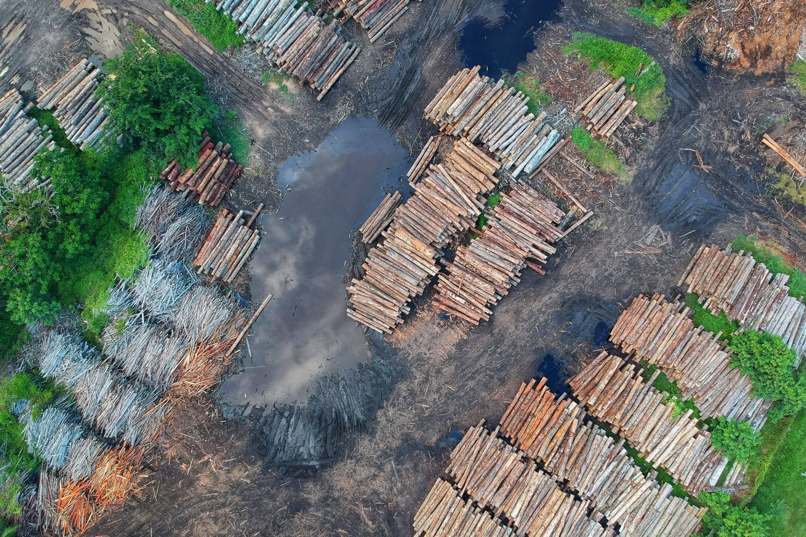 Don't Understand CPWD's U-Turn on Wood Use? Try Modi Govt's Climate Doublespeak.