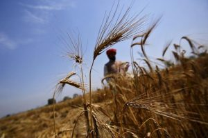Only Six Delhi Farmers Have Benefited From AAP's Much-Touted Plan to Increase MSP