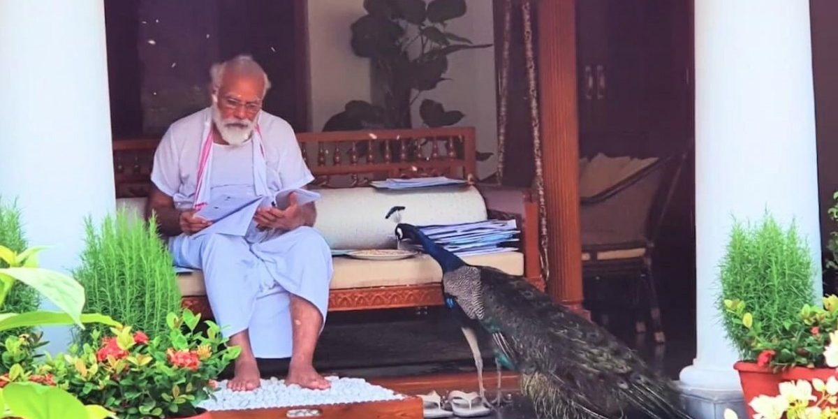 'Postpone JEE and NEET,' Students Comment on PM Modi's Peacock Video