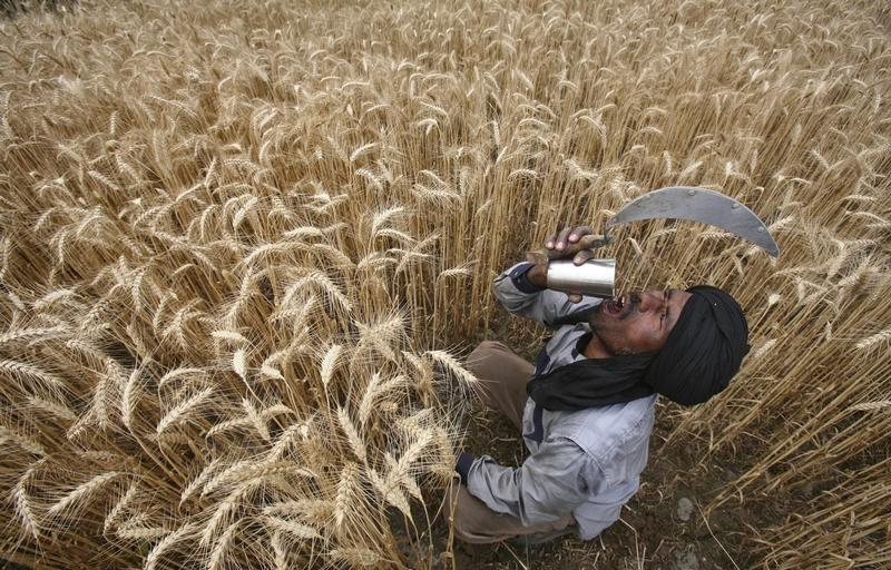 MHA Says Punjab Farmers Give 'Drugs' to Migrant Workers to Extract More Work, Union Slams Claim