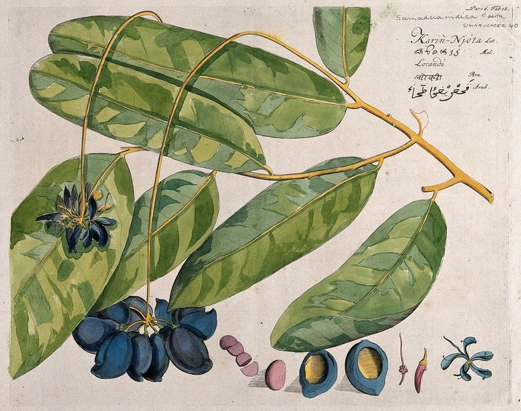 Podcast | How Have Medicinal Plants Changed Our World?