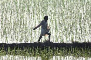 Punjab: Over 13,000 Village Panchayats to Veto Centre's Farm Acts