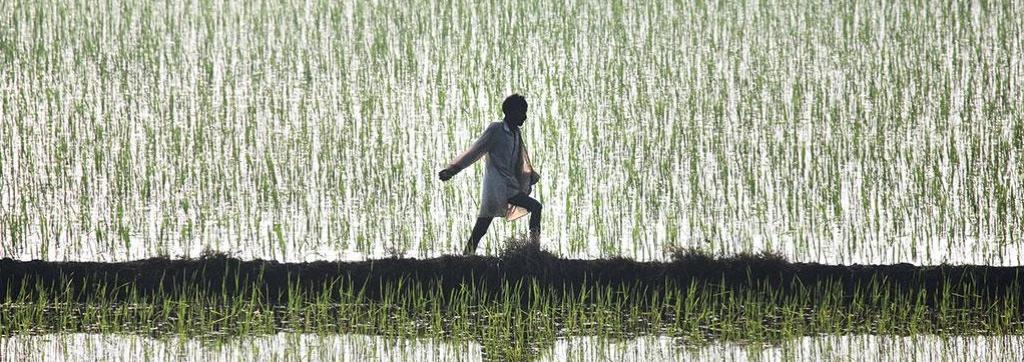 farmers punjab