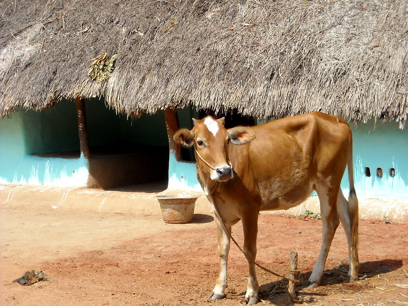What Tamil Nadu's Experience With Private Milk Procurement Tells us About the Pitfalls Of New Farm Bills