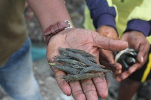 Mumbai's Redevelopment Leaves Koli Fishermen Behind