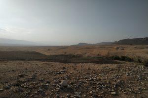 Photo Essay: Dead Sheep in the Jordan Valley