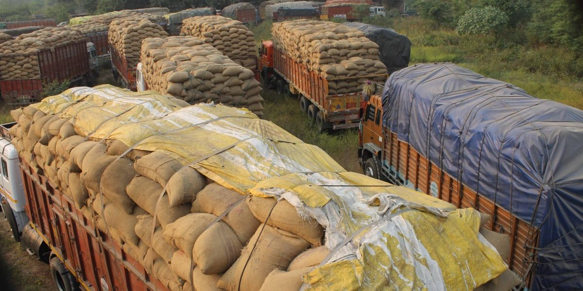 Farmers in 3 States Suffer as Punjab Mandis Are Flooded by Produce from UP, Bihar