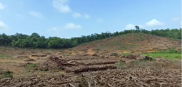 India Needs to Notice How 3 Development Projects Could Alter Goa's Forests Forever