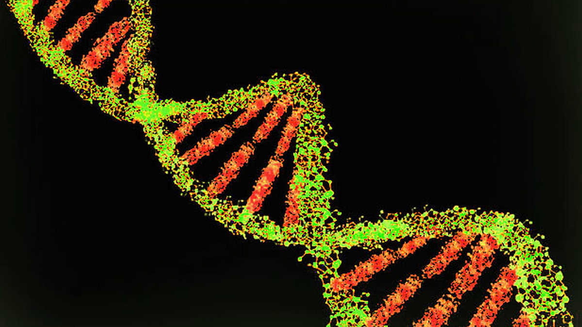Major Study Unveils Vast Diversity of Africa's Genetic Variation – The Wire Science
