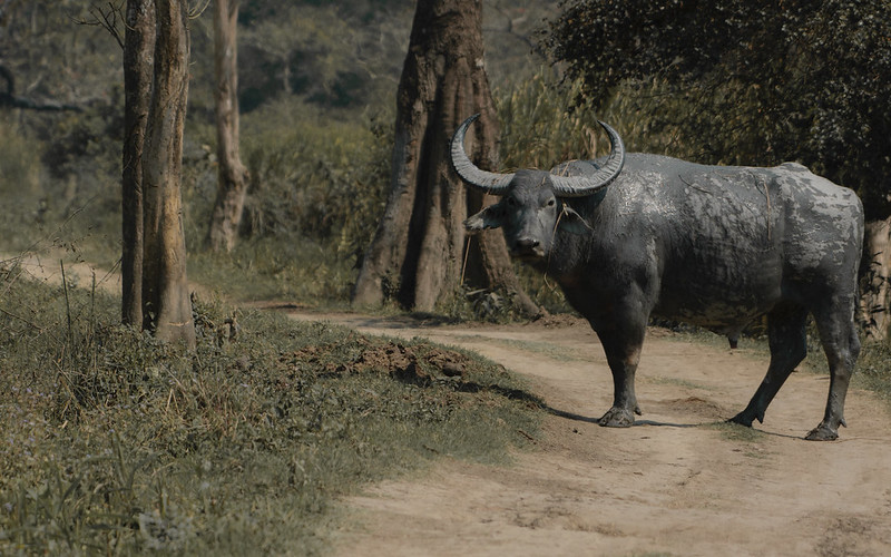 Broken Corridors Around Kaziranga Are Cornering Animals Into Smaller Patches – The Wire Science