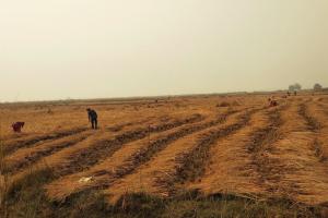 Nitish Cites Bihar Example as Guarantee of Farm Laws' Success; State Farmers Disagree