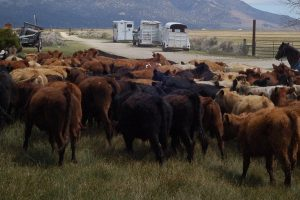 Book Review: How the Beef Industry and the US Co-Evolved and Shaped Each Other