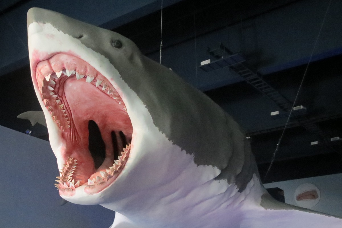 Giant Ancient Sharks Had Giant Babies That Ate Their Siblings in the Womb - The Wire Science