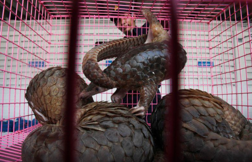 Wildlife Trade Drives Declines of Over 60% Species Abundance - The Wire Science