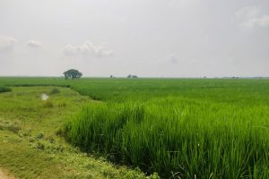 Without Addressing Legacy Issues, Can Digitising Land Records in India Be a Game Changer?