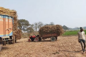 Why Bihari Farmers Are Looking to Sell Their Sugarcane in Nepal