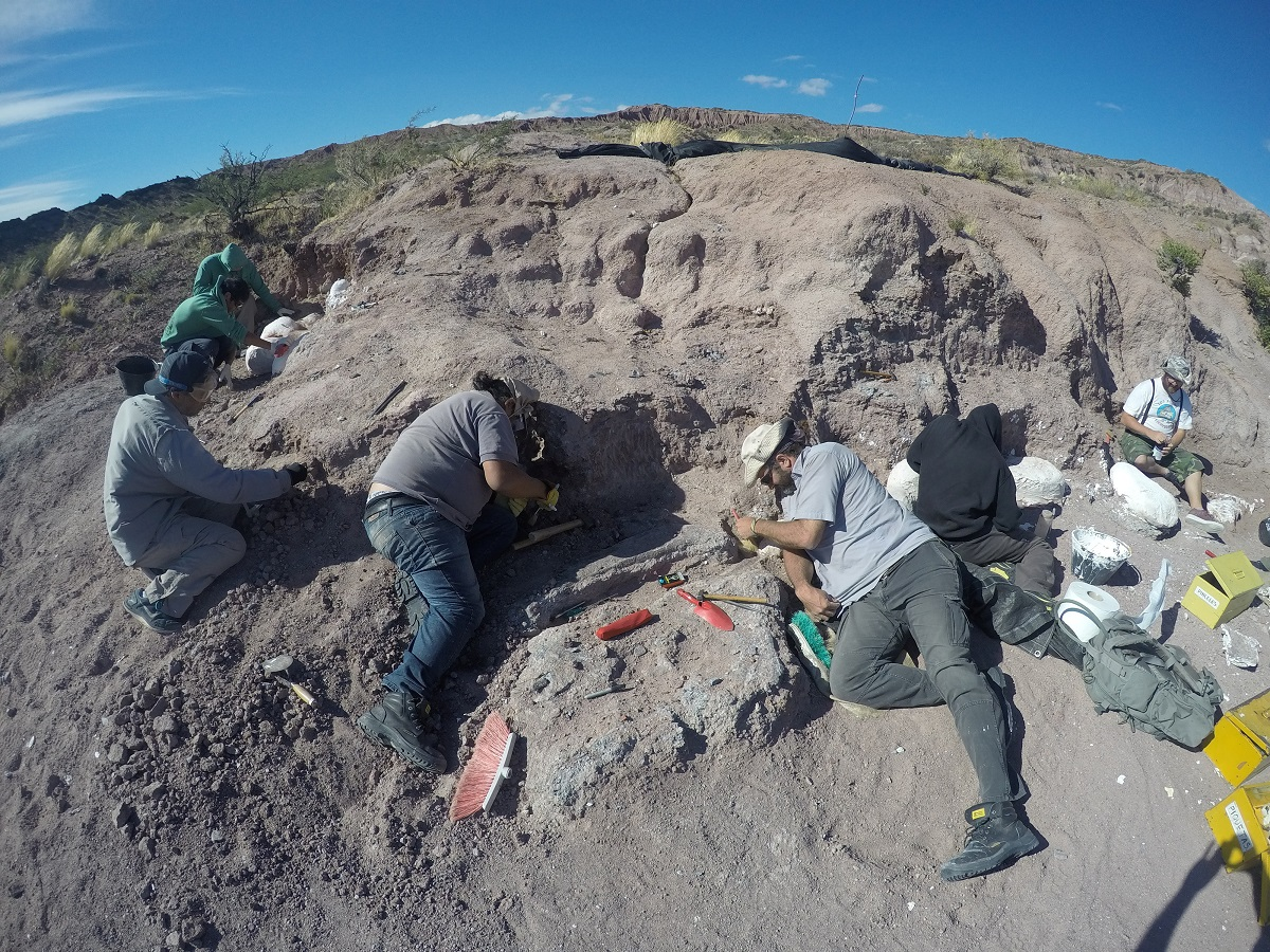 Fossils of Oldest Member of Huge Dinosaur Group Found in Argentina – The Wire Science