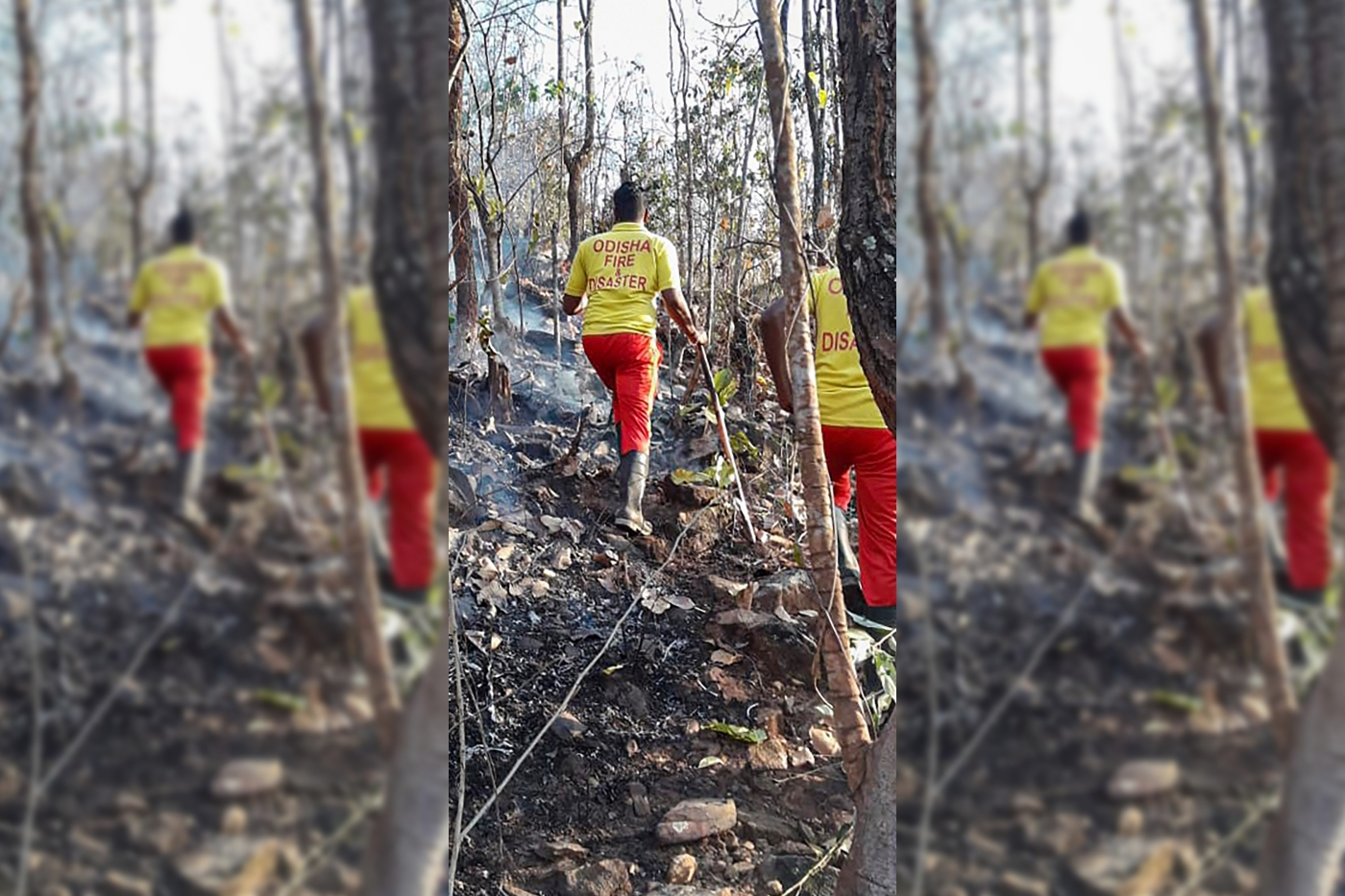 Wildfire Ravages Similipal, Asia's Second Largest Biosphere Reserve – The Wire Science
