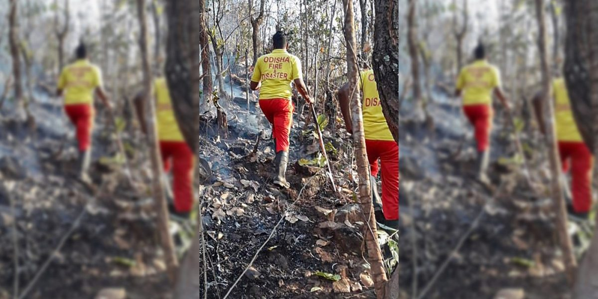 Wildfire Ravages Similipal, Asia's Second Largest Biosphere Reserve