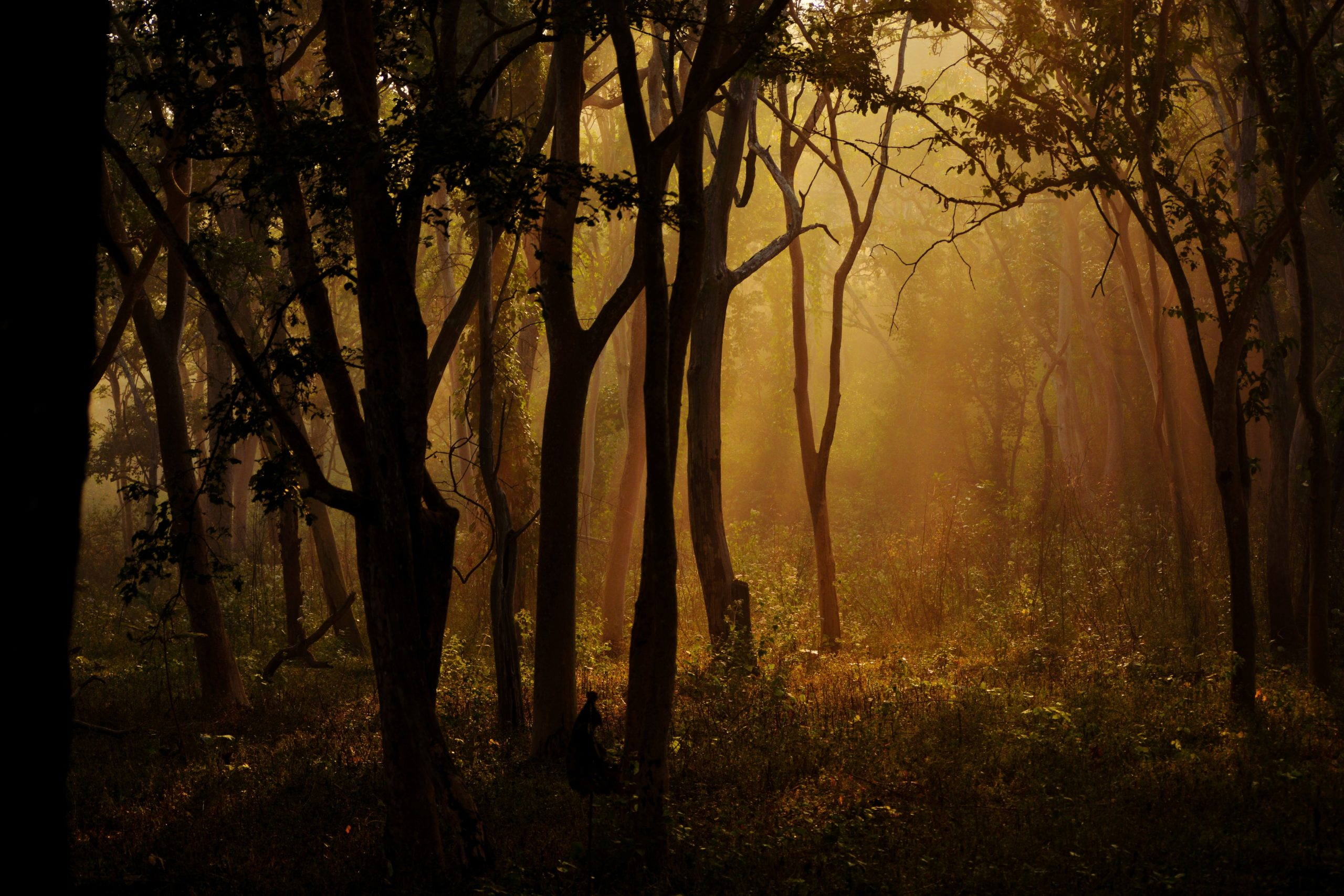 Why India's Forest Rights Act Is the Most Viable Forest Conservation Law – The Wire Science